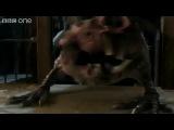 Мерлин трейлер 2 сезона (Rus Westfilm.TV) №2